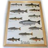 Trouts ポスター額装(サイズ約85×62×高さ3cm)